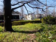 春本番。どうして木の陰は曲がったのかな?