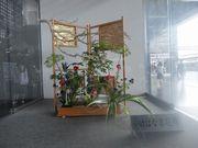 京都北山会館のお花