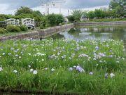 京都長岡の地で。