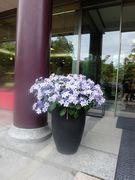 建物の玄関で見かけた花。花はどこにあってもそこに花を添える。