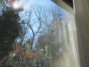 部屋から見る冬の庭