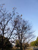好きな景色(昭和記念公園)