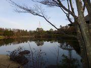 昭和公園冬景色(1)