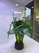 駅の生花。素敵なセンスだと思う。