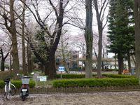 公演風景・桜の残照
