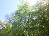 あっという間に新緑の季節