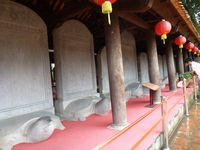 お寺に並んだ亀、亀、亀
