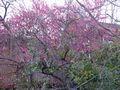 桃の季節に誕生