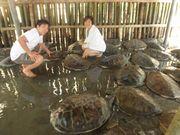 Turtle island(亀の島)で